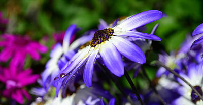 Photograph - Purple Flower by Barbara Walsh
