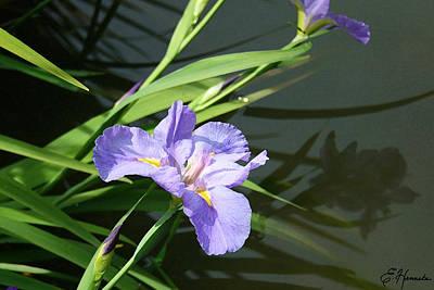 Waterside Painting - Purple Iris Reflection by Ellen Henneke