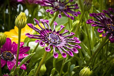 Photograph - Purple Jungle by Eric Miller