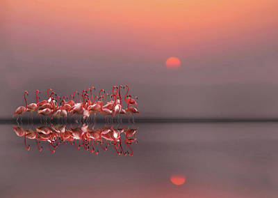 Flocks Photograph - Purple Sunset by Anna Cseresnjes