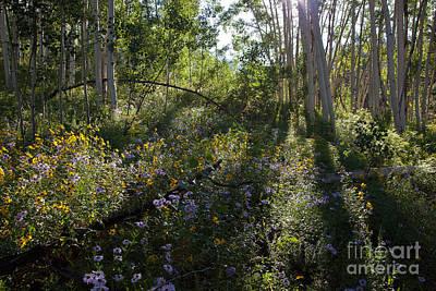 Quaking Aspen Woodland Art Print by Greg Dimijian
