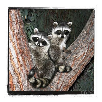 Racoons  Art Print