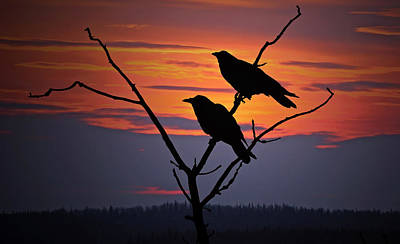 Two Crows Photograph - 2 Ravens by Ron Day