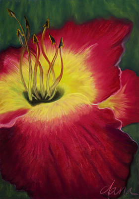 Red Day Lily Art Print by Dana Strotheide