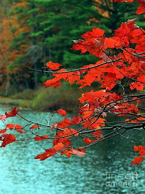Photograph - Red Leaves by Marcia Lee Jones