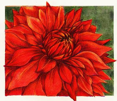 Drawing - Red Mums by Rae Chichilnitsky