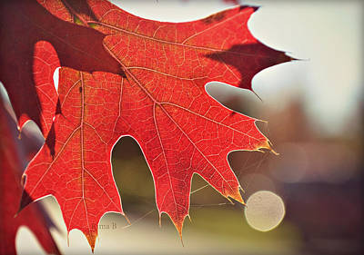 Photograph - red by Rima Biswas