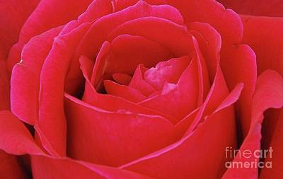 Photograph - Red Rose by Allen Beatty