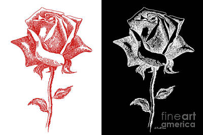 Digital Art - 2 Red Rose Drawing Combo by Gordon Punt