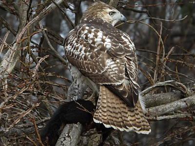 Red Tail Hawk Original by Dennis Pintoski