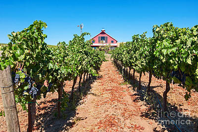 Napa Valley Photograph - Red Wine Barn - Beautiful View Of Wine Vineyards And A Red Barn In Napa Valley. by Jamie Pham