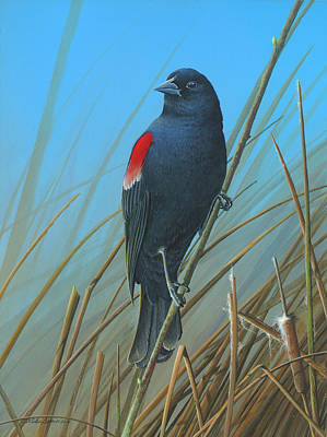 Art Print featuring the painting Red-winged Black Bird by Mike Brown