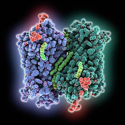 Molecule Photograph - Rhodopsin Molecule by Laguna Design