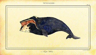 Ocean Digital Art - Right Whale by Juan  Bosco
