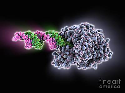 Rna-induced Silencing Complex Art Print