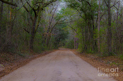 Photograph - Headed To The Angel Oak by Dale Powell