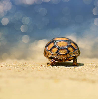 Ocean Turtle Photograph - Road Warrior by Laura Fasulo