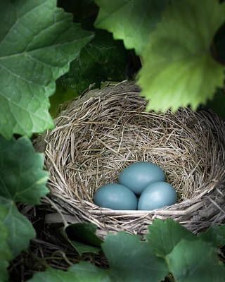 Blue Grapes Photograph - Robin Egg Blues by James Barber
