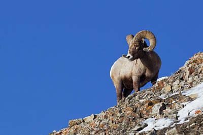 Rocky Mountain Sheep Photograph - Rocky Mountain Bighorn Sheep by Ken Archer