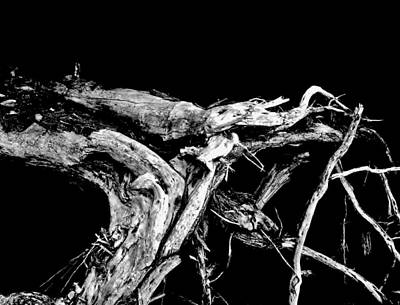 Art Print featuring the photograph Roots 1 by Amar Sheow