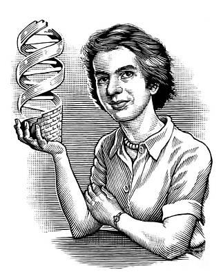 Rosalind Franklin, British Chemist Art Print by Bill Sanderson