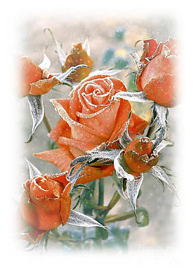 Photograph - Rose In Frost by Sviatlana Kandybovich