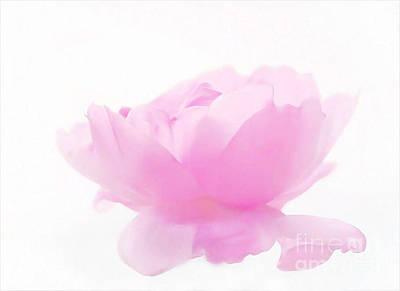 Rose Art Print by Sylvia  Niklasson