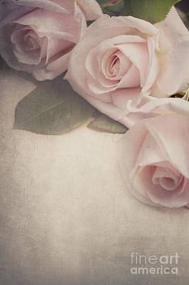 Roses Art Print by Jelena Jovanovic