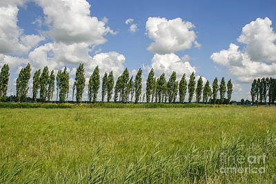 Row Of Trees In The Wind Art Print by Patricia Hofmeester