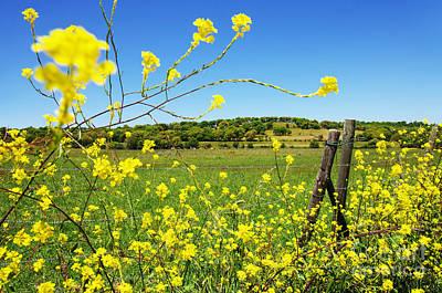 Pasture Scenes Photograph - Rural Landscape by Carlos Caetano