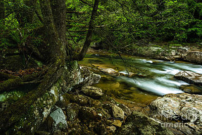 Terry Oneill - Rushing Mountain Stream by Thomas R Fletcher