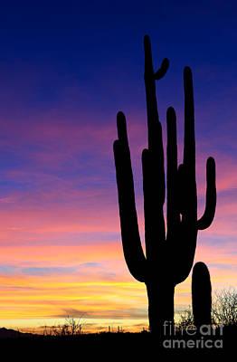 Photograph - Saguaro Silhouette by John Shaw