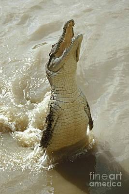 Photograph - saltwater crocodile Australia by Rudi Prott