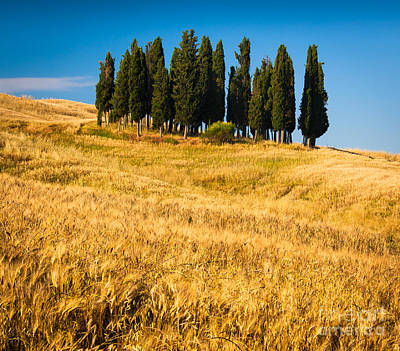 San Quirico D'orcia Art Print by Inge Johnsson