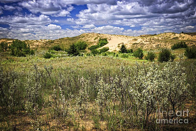 Spruce Photograph - Sand Dunes In Manitoba by Elena Elisseeva