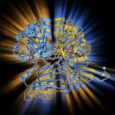 Molecular Structure Photograph - Scavenger Mrna-decapping Enzyme by Laguna Design