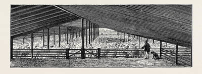 Shed Drawing - Scene At An Australian Sheep Station, Collaroy by Australian School