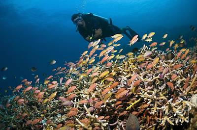 Scuba Diving, Indonesia Art Print