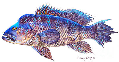 Scuba Painting - Sea Bass by Carey Chen