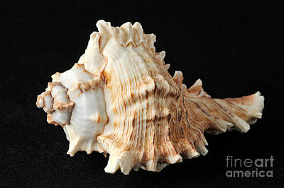 Fossil Photograph - Sea Shell by George Atsametakis