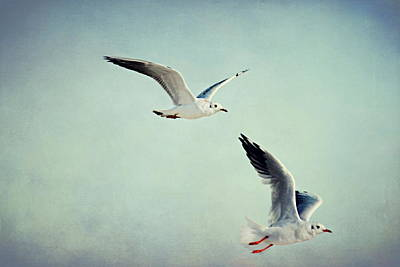 Spring Scenes Mixed Media - Seagulls by Heike Hultsch