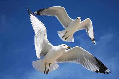 Seagulls In Love Art Print