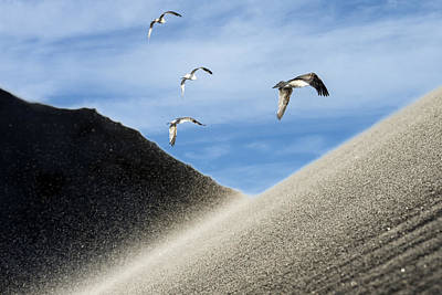 Photograph - Seagulls by Michael Mogensen