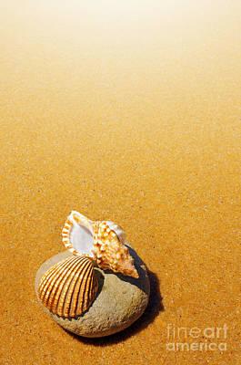 Seashell And Conch Art Print by Carlos Caetano