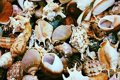 Seashells Art Print by Carol Groenen