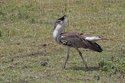 Photograph - Secretary Bird by Tony Murtagh
