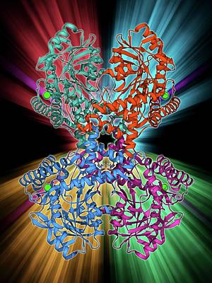 Molecular Structure Photograph - Selenocysteine Synthase Enzyme Molecule by Laguna Design