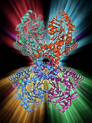 Selenocysteine Synthase Enzyme Molecule Art Print