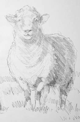 Drawing - Sheep by Mike Jory