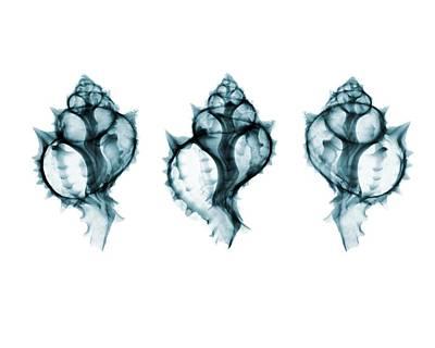 Shells Art Print by Brendan Fitzpatrick